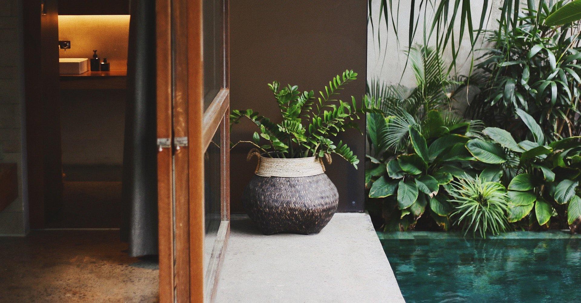 Grön planta i ett rum